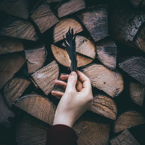 Cropped hand holding feather above logs