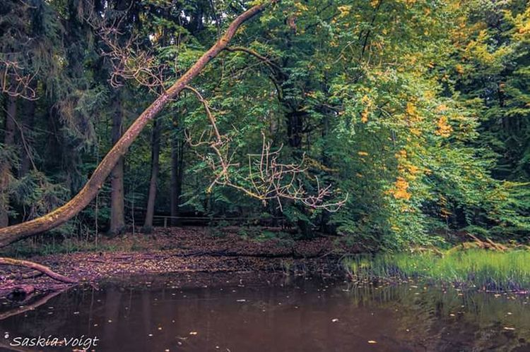 Hainich Nationalpark Landscape Nature Nature Photography Light And Shadow Traveling Herbstspaziergang Herbstfarben Water Reflections Spiegelung Wood
