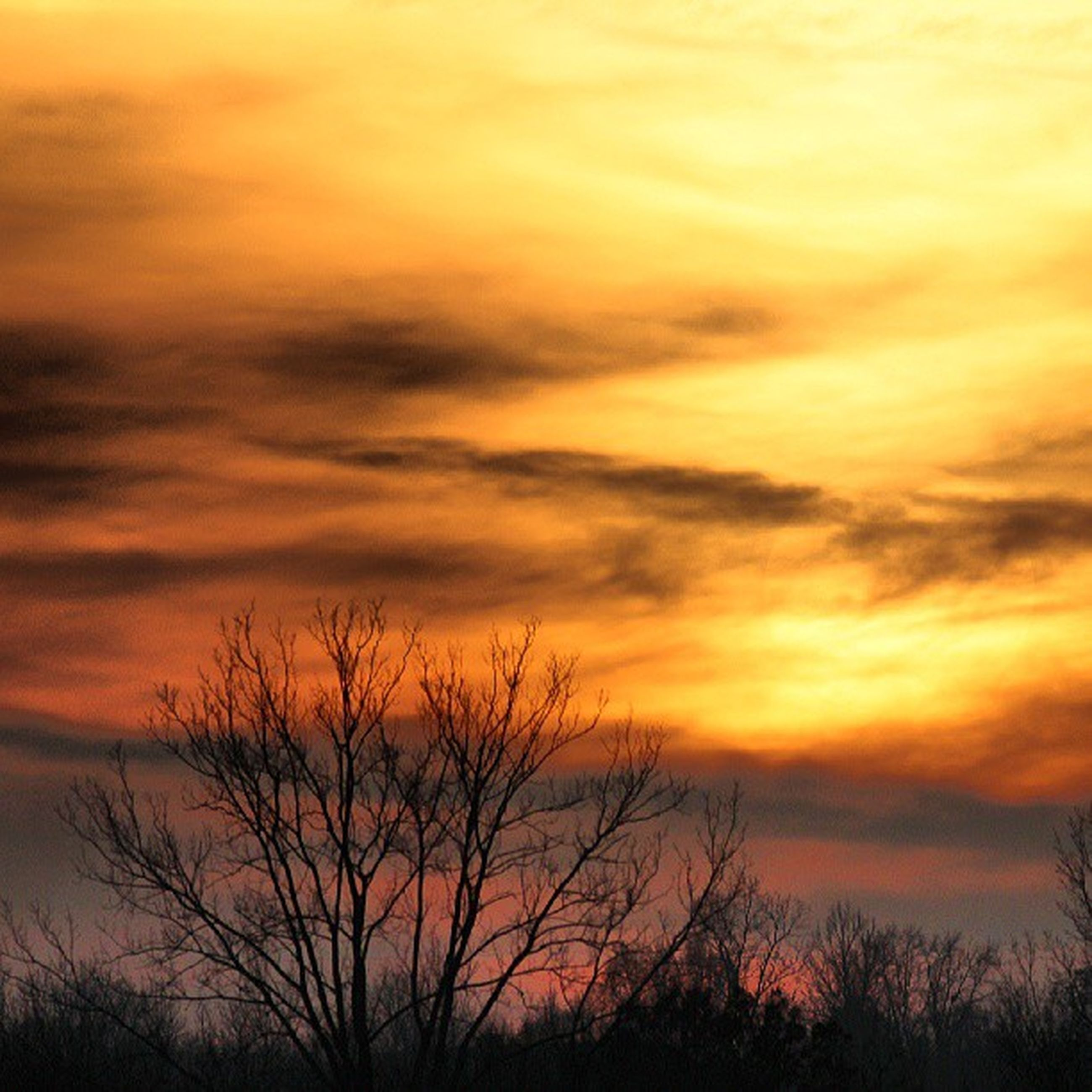 sunset, silhouette, orange color, sky, beauty in nature, scenics, tranquility, tranquil scene, cloud - sky, tree, dramatic sky, nature, low angle view, bare tree, idyllic, majestic, cloud, branch, outdoors, no people