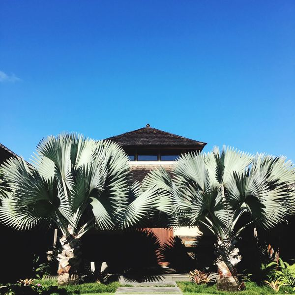 Travel Vacation Laie Hawaii Clear Sky Building Exterior Built Structure Outdoors Architecture No People Day Growth Cactus Palm Tree Blue Plant Beauty In Nature Sky Nature