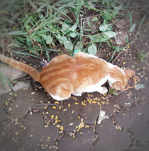 One Animal Animal Themes Animals In The Wild No People Nature Outdoors Grass Day Mammal Beauty In Nature Close-up Street Cat Cats Of EyeEm Cats Hungry Cat