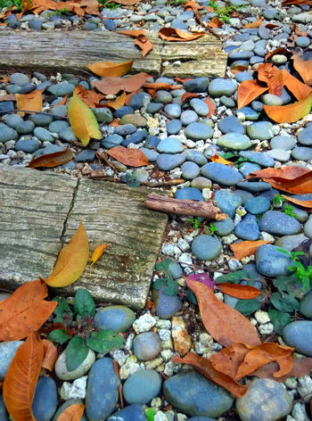 another sidewalk in the park Colorful Footpath Large Group Of Objects Leaf Multi Colored Nature Paving Stone Stone Stone - Material Stone - Object Stone Material Vibrant Color
