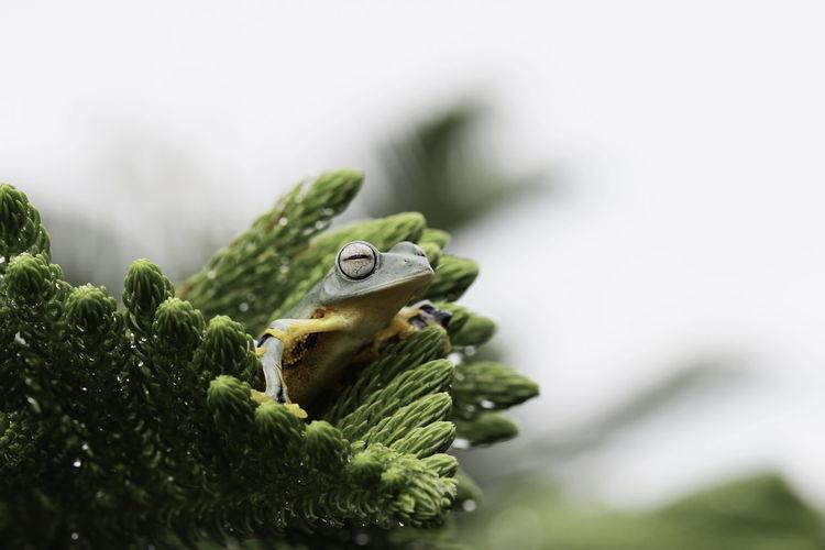 Frog on tree