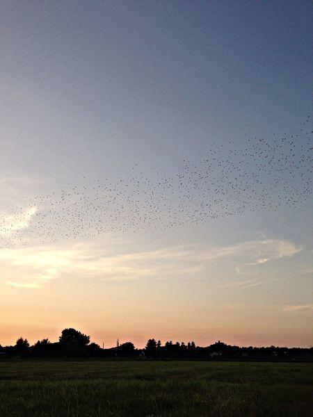 Birds Sunset Nature EyeEm Nature Lover