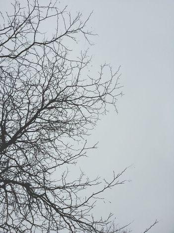 Steph Filter TreePorn