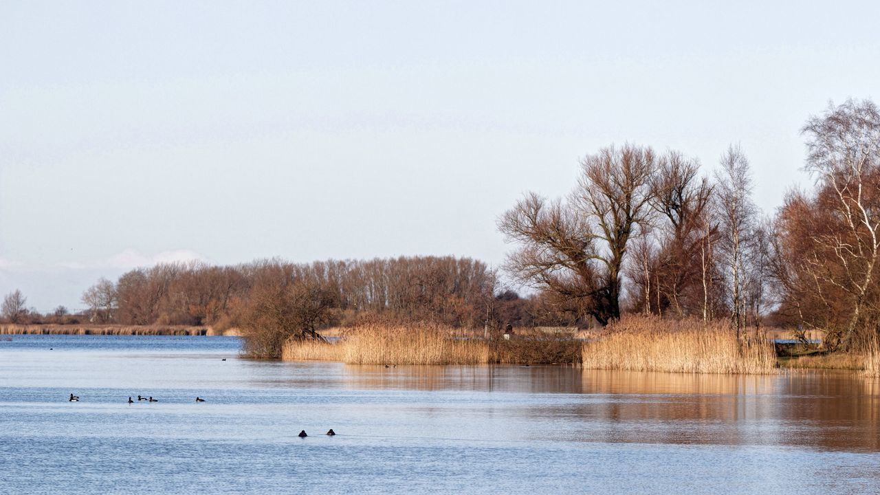 water, animal themes, animals in the wild, tree, bird, nature, bare tree, waterfront, animal wildlife, beauty in nature, lake, outdoors, day, tranquility, no people, one animal, scenics, swimming, duck, water bird, sky, swimming animal, goose, swan, winter, cold temperature, branch, mammal