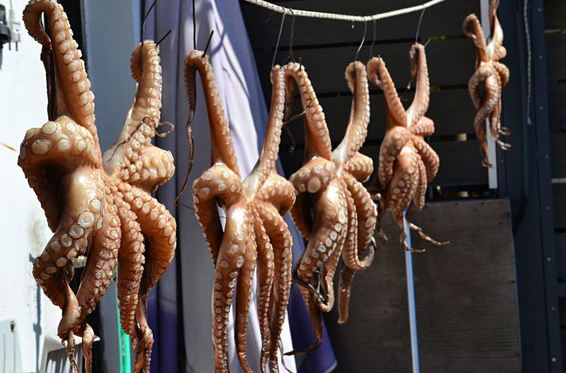 Close-up of octopus for sale at market stall