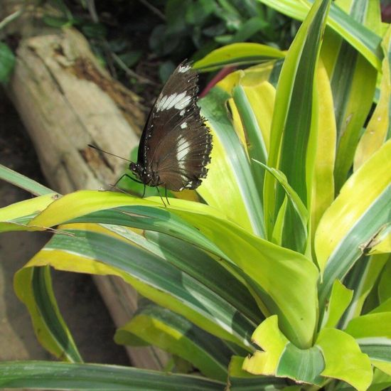 Butterfly Beautiful Animals In The Wild Nature