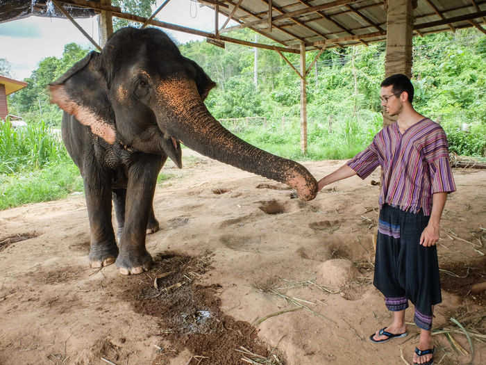 Man Holding Elephant Trunk While Standing At Shed