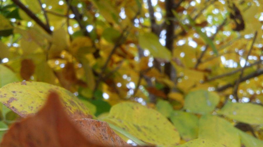Naturaleza🌾🌿 Nature Photography Fotonatural Naturaleza🌵🌻🎶 Hojas De Otoño Hojas Secas Arboles , Naturaleza Hojasverdes Hojas Y Ramas Nature Mundo Fotography Photo Tierra World
