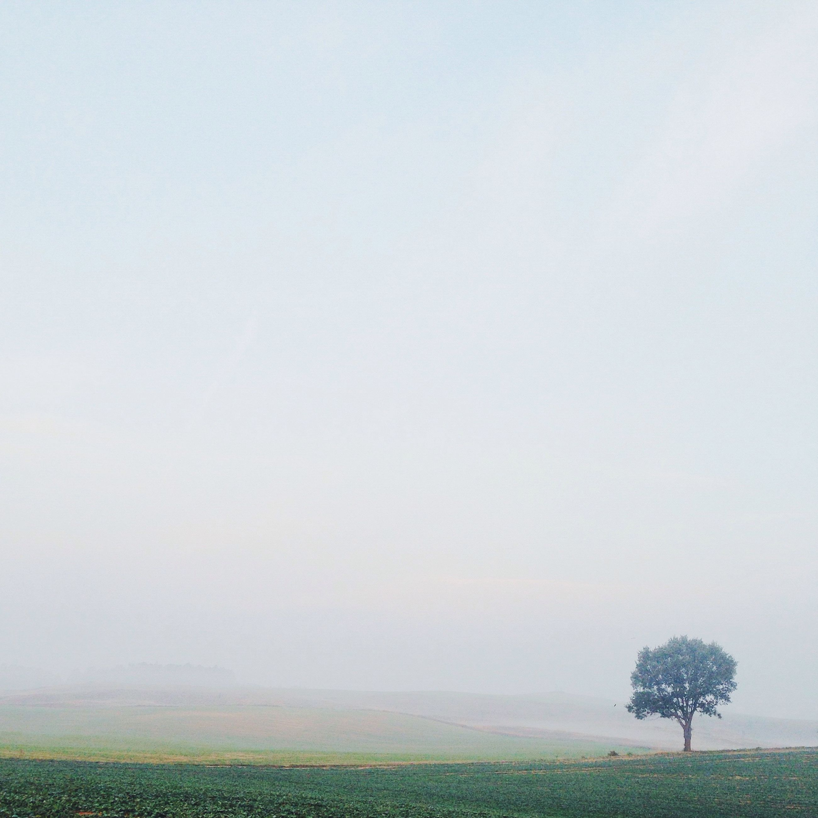 fog, tranquil scene, copy space, tranquility, scenics, beauty in nature, foggy, nature, landscape, tree, field, weather, grass, idyllic, growth, remote, non-urban scene, sky, horizon over water