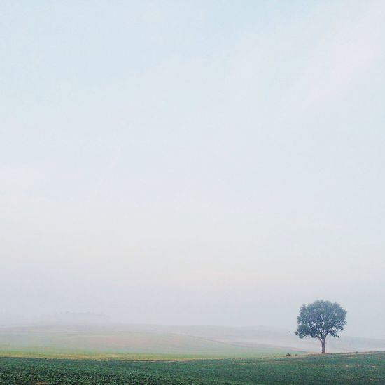 Minimal. IPSSpace Landscape Fog Nature
