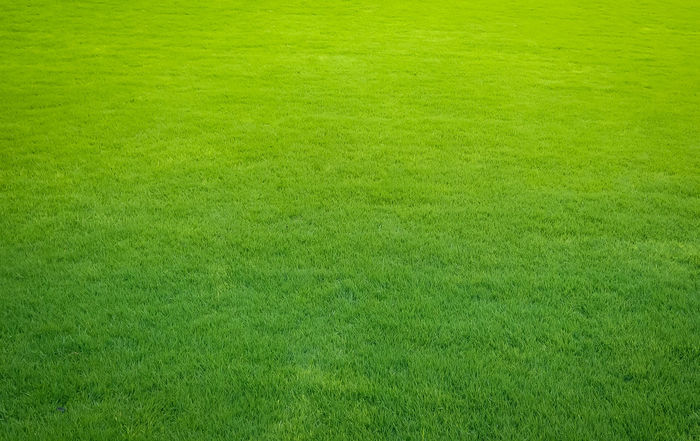 Green lawn American Football Field Backgrounds Beauty In Nature Close-up Day Full Frame Golf Course Grass Green - Golf Course Green Color Nature No People Outdoors Sport Textured
