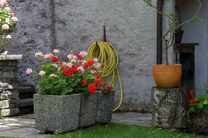 Ganden of the Verzasca Valley Wall Building Exterior Built Structure Flower Growth No People Outdoor Park Plant Pot Pots Potted Plant Spring Sprinkle Sprinkler Stone Summer Verzasca Valley Water Be. Ready.