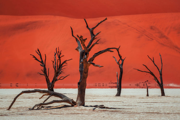 Dead Vlei, Namibia on a bright day Sand Dune Namib Desert Dead Vlei, Namibia Desert Namibia Namibia Landscape Orange Africa Bare Tree Beauty In Nature Dead Plant Dead Vlei Nature No People Scenics - Nature Tourist Destination Tranquility Travel Destinations Tree Dried Plant Dried Dead Tree Scenics Arid Landscape The Great Outdoors - 2018 EyeEm Awards
