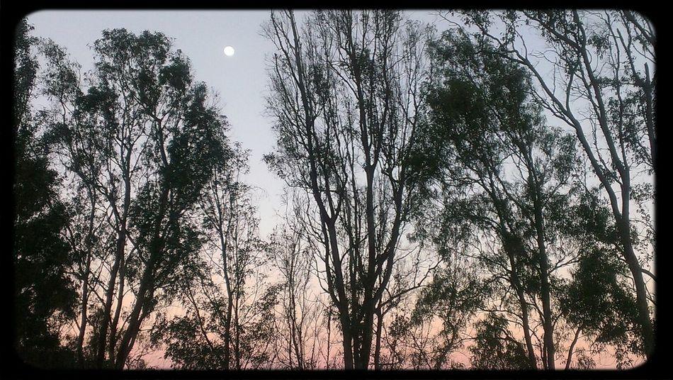 Morning Moon!!!