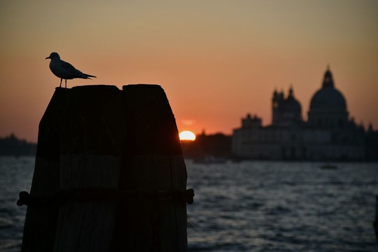 Silhouette Seagull Perching On Wooden Post During Sunset
