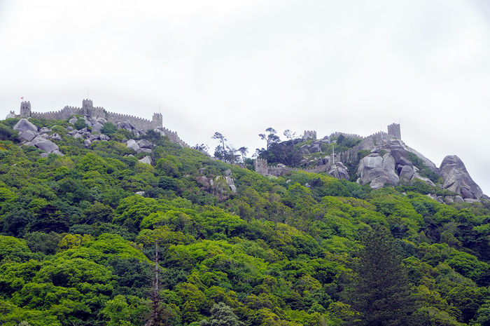 Castle of the Moors in Sintra Castle Of The Moors In Sintra Beauty In Nature Castel Day Fog Green Color Growth Mororsport Mountain Nature No People Outdoors Scenics Sky Tranquil Scene Tranquility Tree