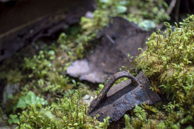 Human Signs WW 1 Relics Animal Themes Close-up Day Focus On Foreground Green Color Growth Leaf Moss Nature No People One Animal Outdoors Plant Plant Part Reptile Selective Focus Vertebrate