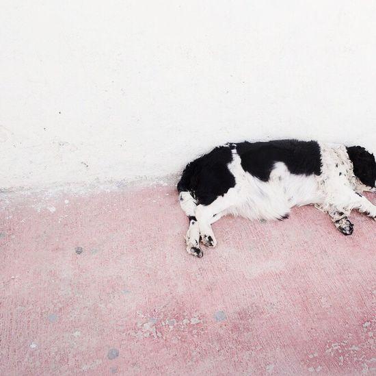 Dog Photo♡ Cool Byjimenazhu
