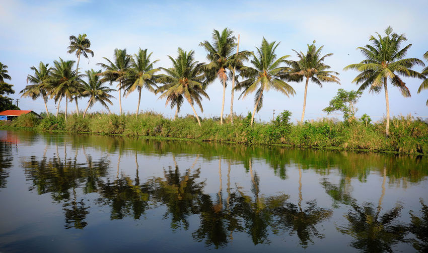 View from boat house Palm Tree Tree Plant Tropical Climate Water Reflection Sky Beauty In Nature Tranquility Growth Lake Scenics - Nature Tranquil Scene Nature Waterfront Day No People Green Color Idyllic Outdoors Coconut Palm Tree Kerala India Alleppey Boat House