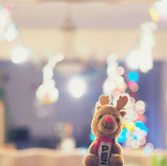December Raindeer Christmas Tree Christmas Decorations PEZ First Eyeem Photo Showcase: December