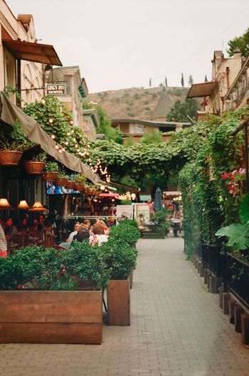 Tbilisi Built Structure Building Exterior Architecture Real People Market Plant Buying Retail  Outdoors Customer  Day Nature Sky People