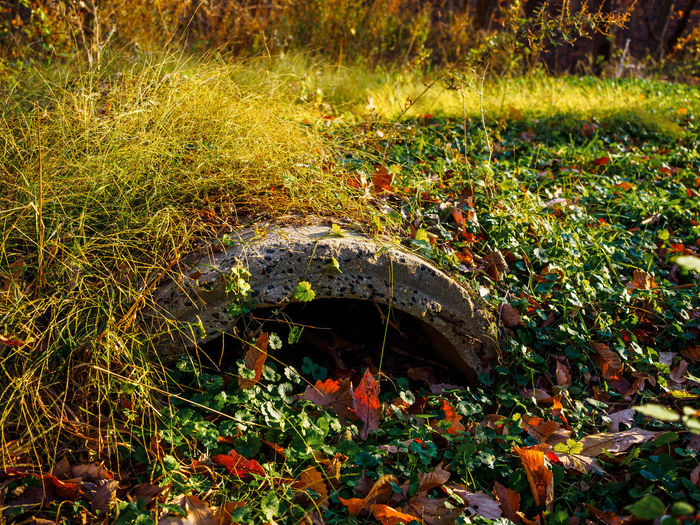 Architecture Beauty In Nature Capital Color Day Fall Grass Greens Growth Leaves Nature No People Outdoors Rock Creek Park Ruins Washington DC Water