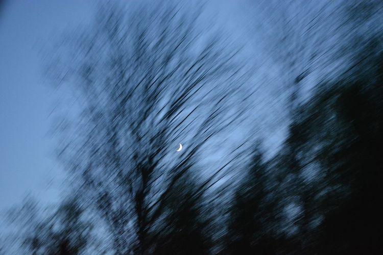 Defocused image of tree on snow covered landscape