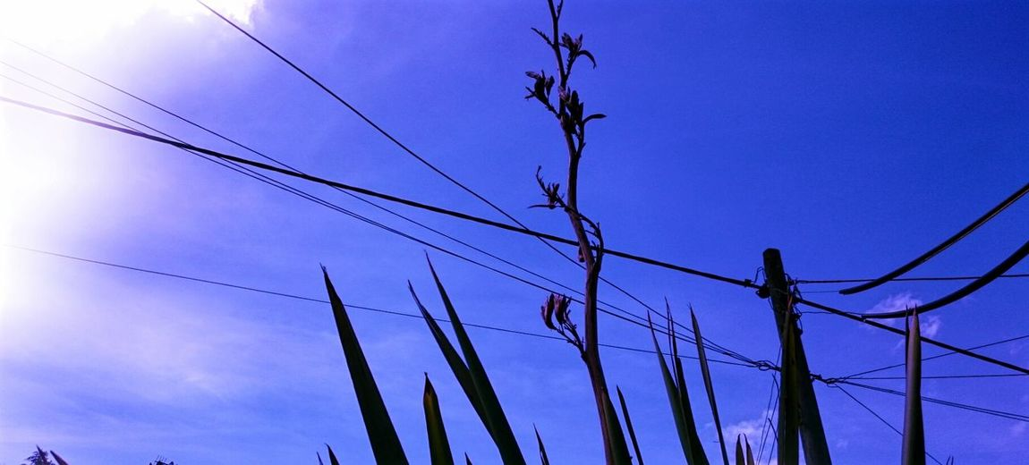 Blue Sky Silhouettes Silhouette_collection New Zealand Flax Telephone Wires Sunny Day Shapes And Lines