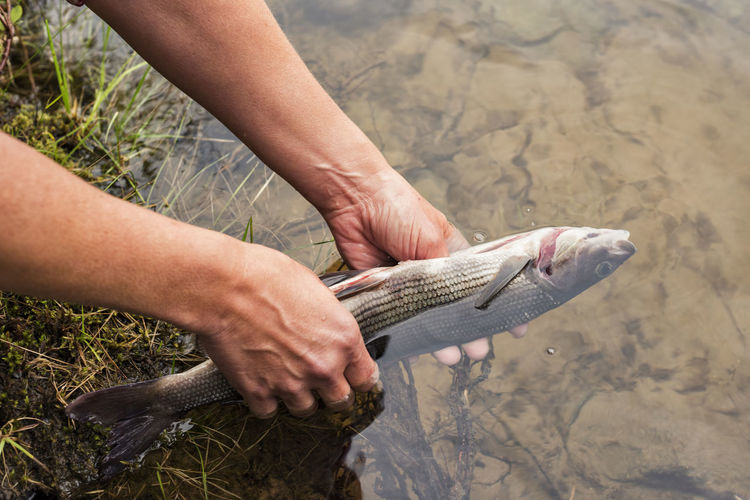 Midsection of person holding fish