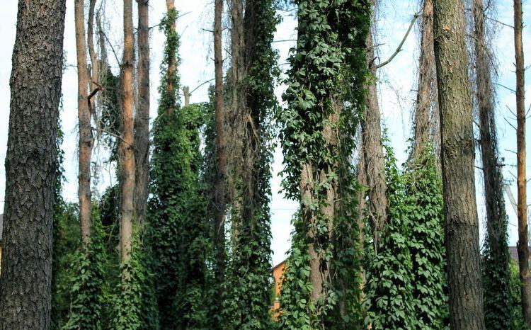 Trees Plants Forest Wood Ukraine Nature Photo Canon