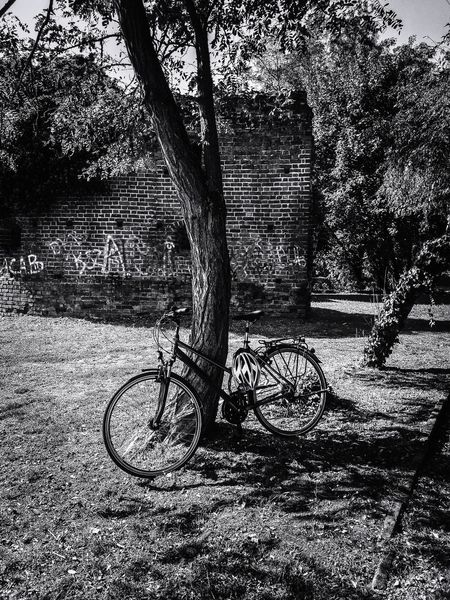 The bicycle on the tree 🌳🚲🌳. I took this picture while walking through the city park in Zossen. I really liked the scene with the bike and the tree, so I captured it right away. In the background you can still see the walls of the old lookout tower, which belonged to the former castle, which does not exist anymore. There are only a few foundations left. Bicycle Bicycle Rack Tree Trees Tree Trunk Light And Shadow Light Black Blackandwhite Black And White Black & White Blackandwhite Photography EyeEm Best Shots EyeEmNewHere EyeEm Nature Lover EyeEm Selects GERMANY🇩🇪DEUTSCHERLAND@ Germany🇩🇪 Nature Wall Brick Wall Streetphotography Streetart Beauty In Nature Nature Photography Backgrounds Shadow Full Frame Sunlight Close-up #urbanana: The Urban Playground