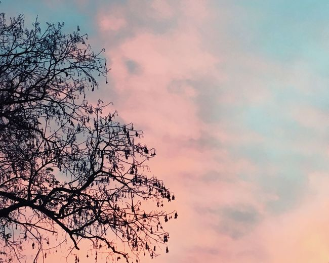 Summer sky ✨ Sky Beauty In Nature Sunset No People Tree Outdoors Day Summer Beauty
