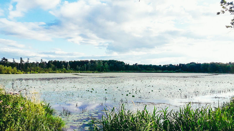 Brzeszcze lake Nature Lake Water Agriculture Cloud - Sky Scenics Beauty In Nature Landscape Growth Plant Grass No People Reflection Rural Scene Sky Tree Outdoors Poland Is Beautiful Poland 💗 Atmospheric Perspective EeyemBestEdits Week Of Poland Walk This Way Poland Eyeem
