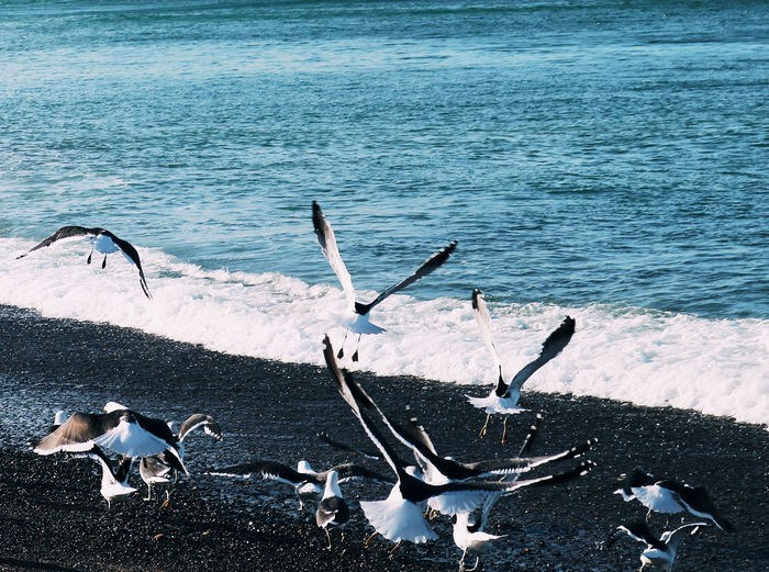 High angle view of seagulls on beach