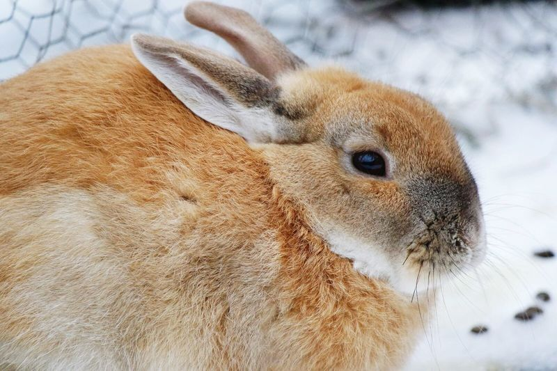Close-Up Of Rabbit Outdoors