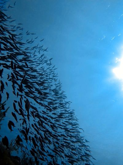 Fish swimming in sea against blue sky