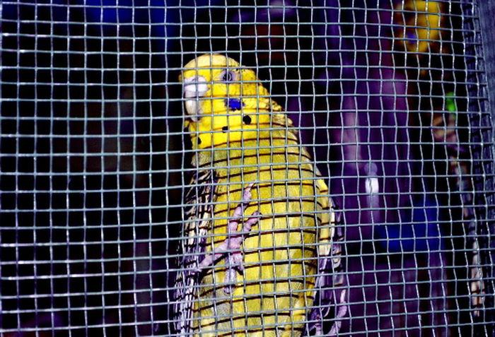 Pirico Animal Animal Head  Animal Photography Animal Themes Animals Oiseaux One Animal
