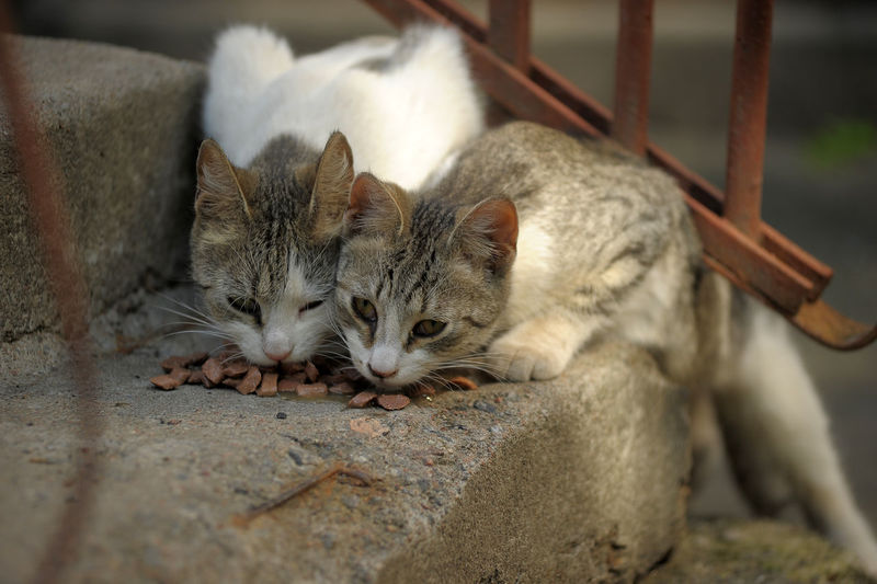 Close-up of cats resting