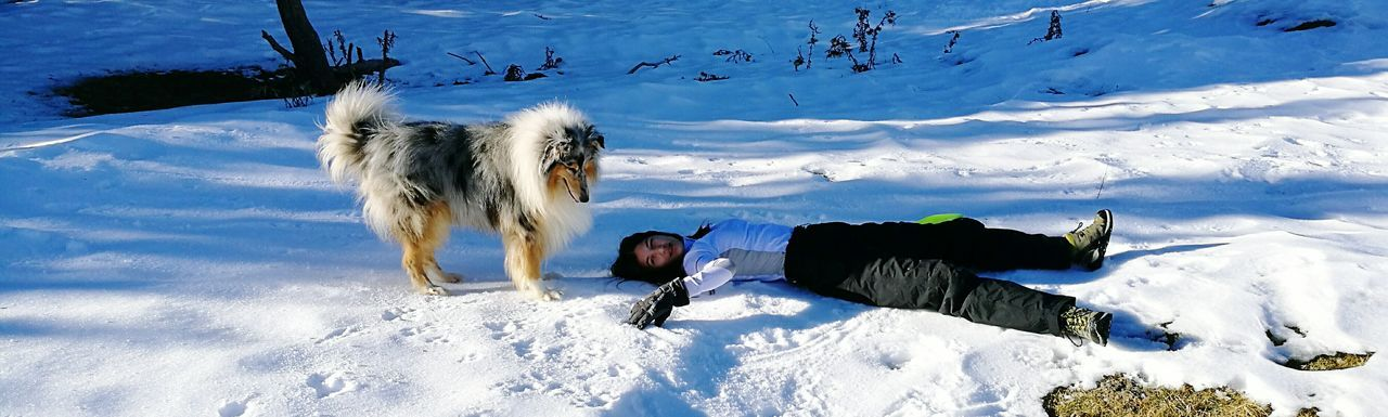 Snow Winter Cold Temperature Leisure Activity Sunlight Day Outdoors Beauty In Nature Nature Tree Adventure Ski Holiday Snow Sports Capture The Moment Beauty In Nature One Animal Domestic Animals Dog Animals In The Wild Clear Sky Tree Animal Real People Young Women Snow Sports Pet Portraits