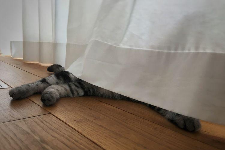 A Cat's Hiding