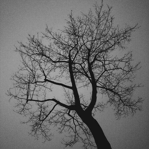 Gojira Gdynia Desdemona Tree Dark Night Sky