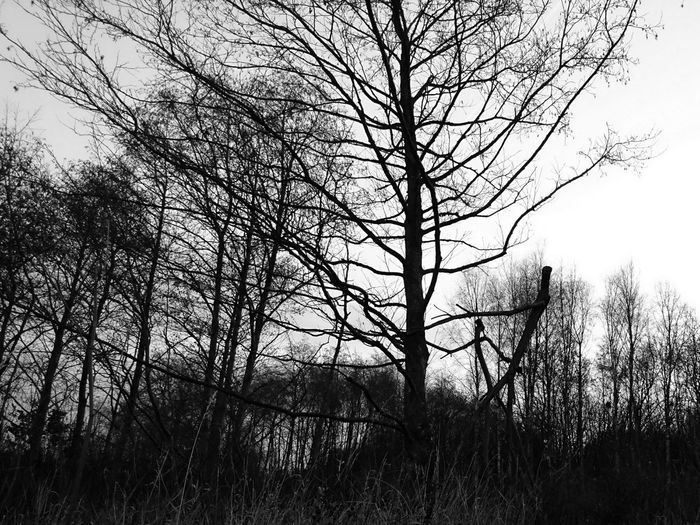 Tree Nature Sky Beauty In Nature No People Outdoors Tranquility Forest Bare Tree Silhouette Scenics Day Black And White Black And White Collection  Bidston Moss Forestry Commission Wirral Tranquility The Dance Tree People