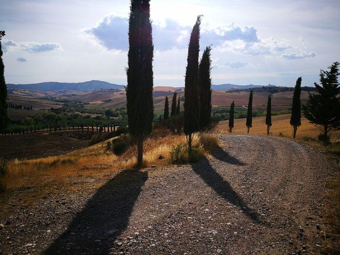 No People Day Outdoors Nature Tree Sky Siena Italy Siena Toscana Tuscany Tuscany Countryside Grano Cipressi