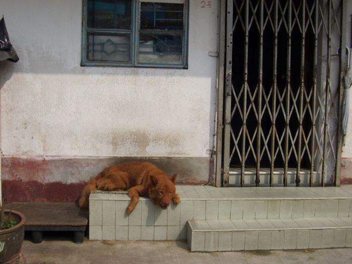 Dog lying on steps of house