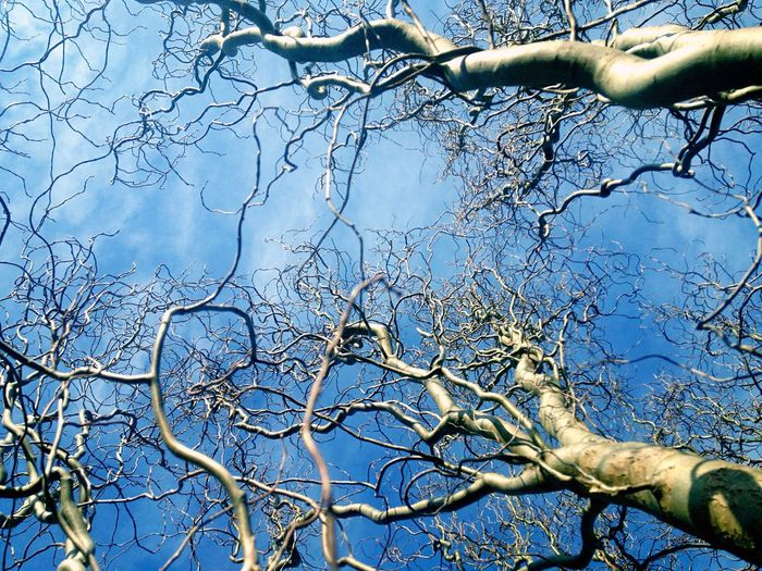 Twisted Tree Branch Bare Tree Nature Sky Low Angle View Tree Trunk Beauty In Nature Twisted Willow Tree Nature Nature_collection Naturelovers Beauty In Nature Hugging A Tree