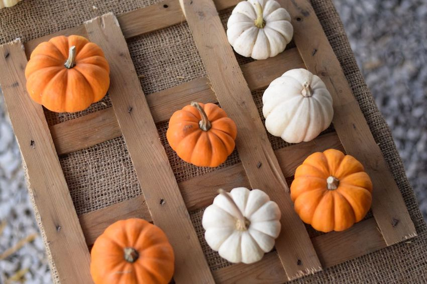 EyeEm Selects Three Pumpkins in a row Pumpkin Autumn Still Life Games Tictactoe Play Directly Above Gourd