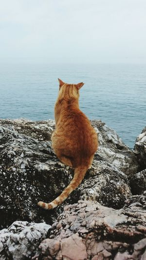 Rear view of cat on rock by sea against sky