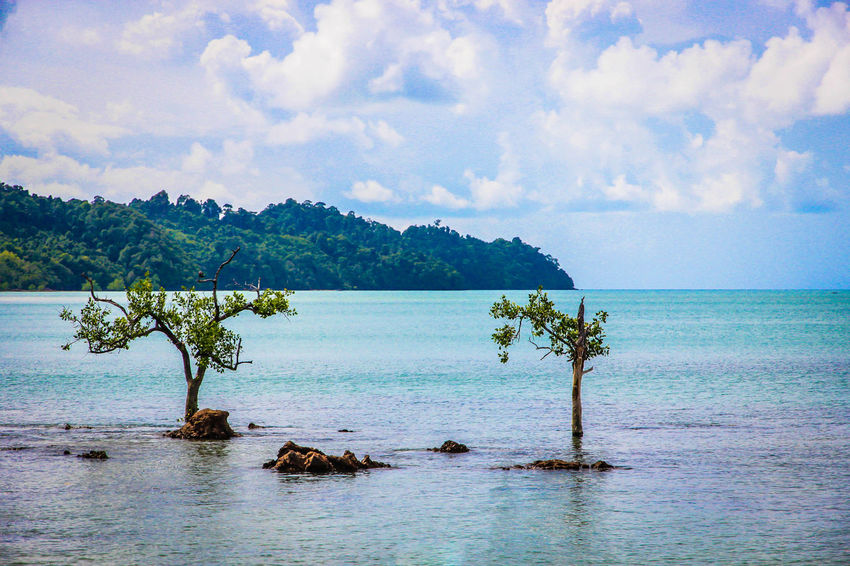Tree in the sea Cloud - Sky Cloud Clear Sky Kohphayam Thailand Ranong ทะเล ระนอง ประเทศไทย ท่องเที่ยวไทย ท่องเที่ยว เกาะพยาม ขอบฟ้า ท้องฟ้ากะทะเล UnderSea Tree Water Sea Tropical Climate Blue Sky Horizon Over Water Seascape Island Coast Lagoon